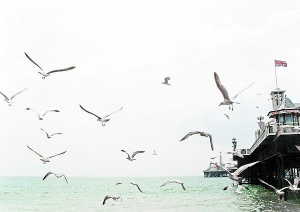 Seaside Seagulls Print by Richard Newstead