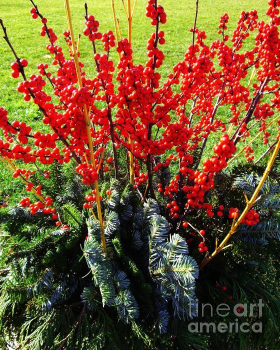 Seasons Greetings Print by Xueling Zou