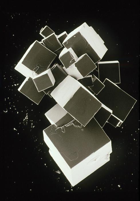 Sem Of Pure Sodium Chloride (recrystallised) Print by Dr Jeremy Burgess