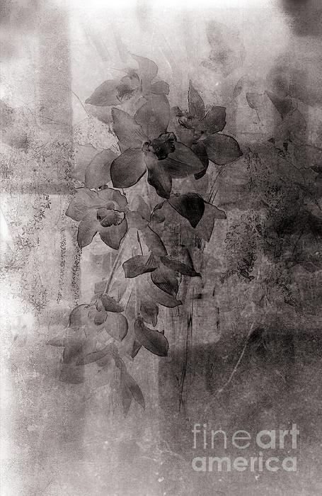 Serenade Print by Susanne Van Hulst