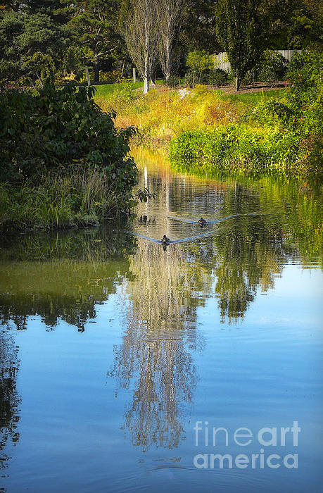 Serene Reflection Print by Julie Palencia