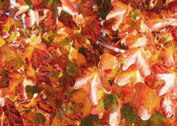 Seurat-like Fall Leaves Print by Carol Groenen
