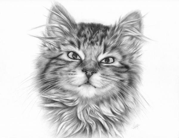 - seven--tabby-kitten-heather-page