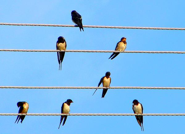 Ana Maria Edulescu - Seven Swallows