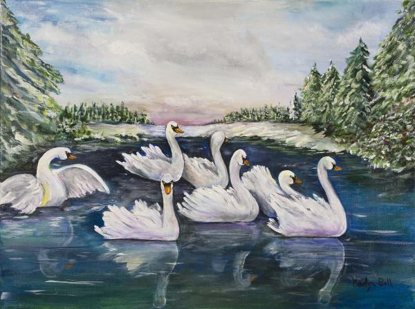 Swimming seven swans a swimming a family of seven swimming seven swans