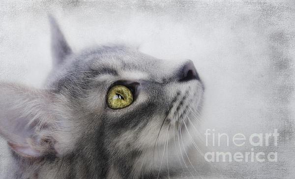 Sue Fulton - Shades of Grey