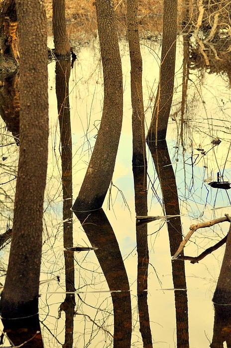 Shadow Trees Print by Marty Koch