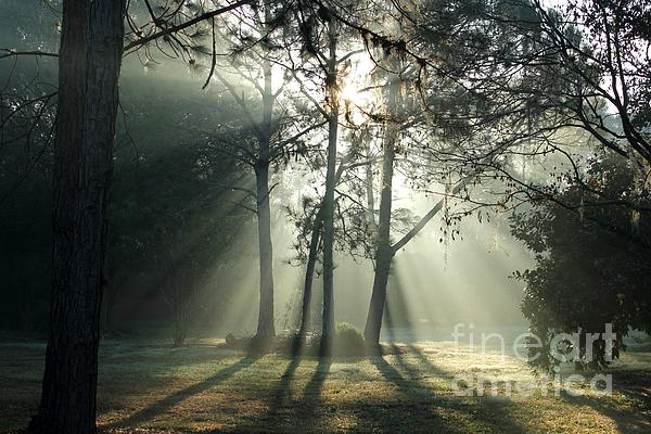 Shadows And Fog Print by Theresa Willingham