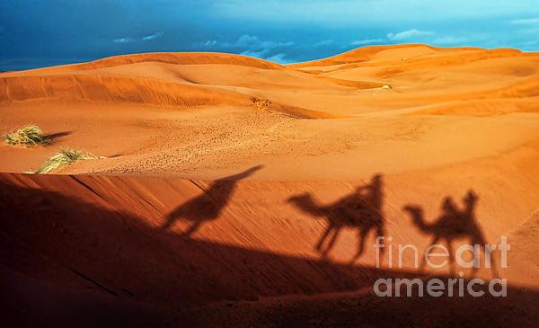 Alexandra Jordankova - Shadows of Desert