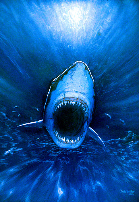 Shark Attack Print by Chris Butler