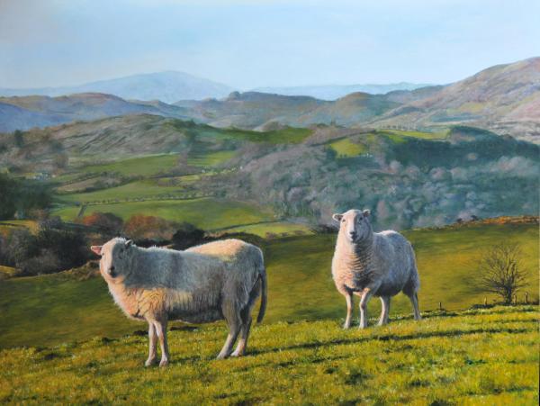 Sheep At Rhug Print by Harry Robertson