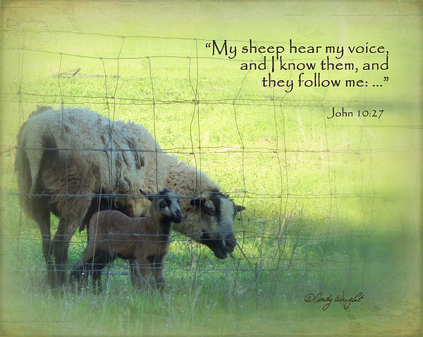 Sheep Scripture John 10 Print by Cindy Wright