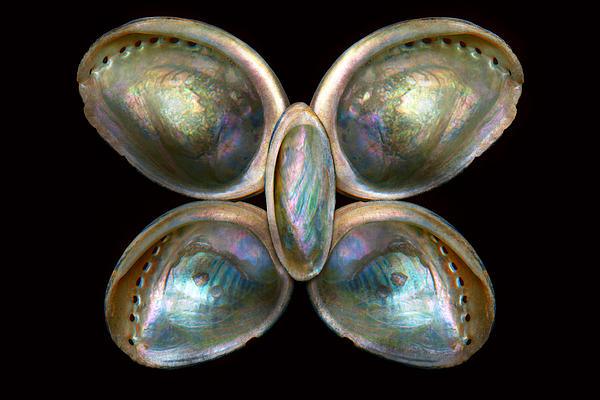 Shell - Conchology - Devine Pearlescence Print by Mike Savad