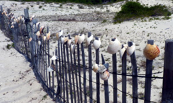 Carla Parris - Shell-Decorated Fence