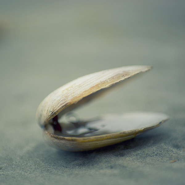 Shell Print by Jill Ferry Photography