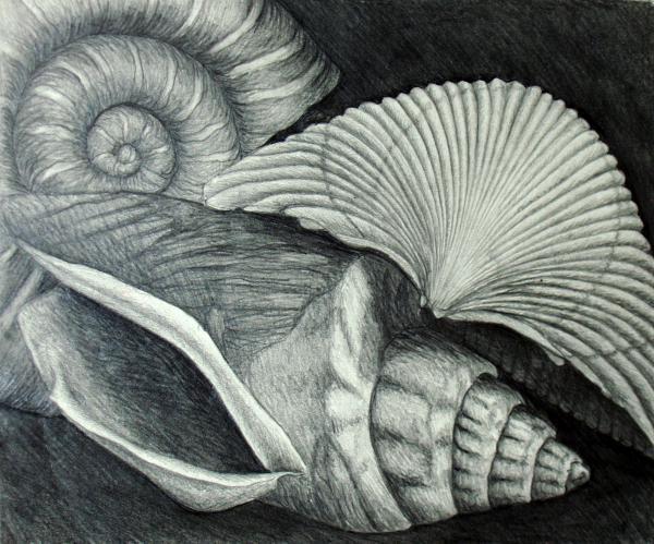 Shells by Nancy Mueller