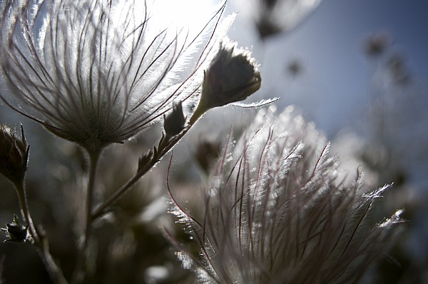 Shimmering Flower II Print by Ray Laskowitz - Printscapes