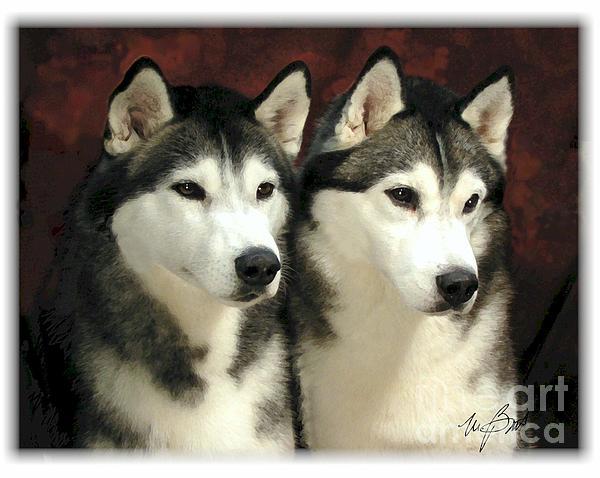 Siberian Huskies Related Print by Maxine Bochnia