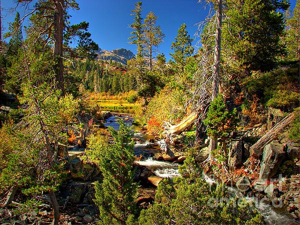 Sierra Nevada Fall Beauty At Lily Lake Print by Scott McGuire