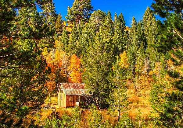 Sierra Nevada Rustic Americana Barn With Aspen Fall Color Print by Scott McGuire