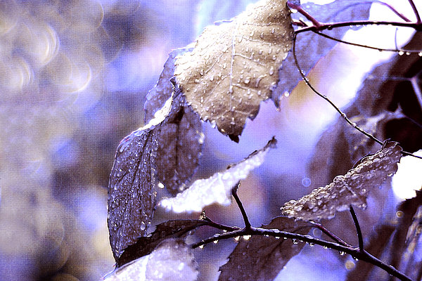 Silver Rain. The Garden Of Dreams Print by Jenny Rainbow