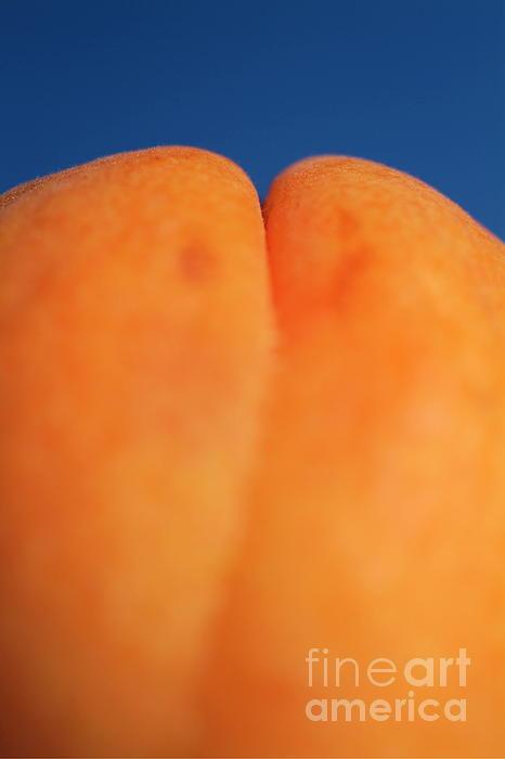 Single Ripe Apricot Print by Sami Sarkis