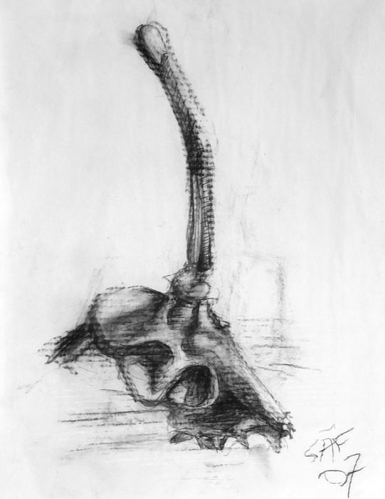 Skull Print by Sheridan Furrer