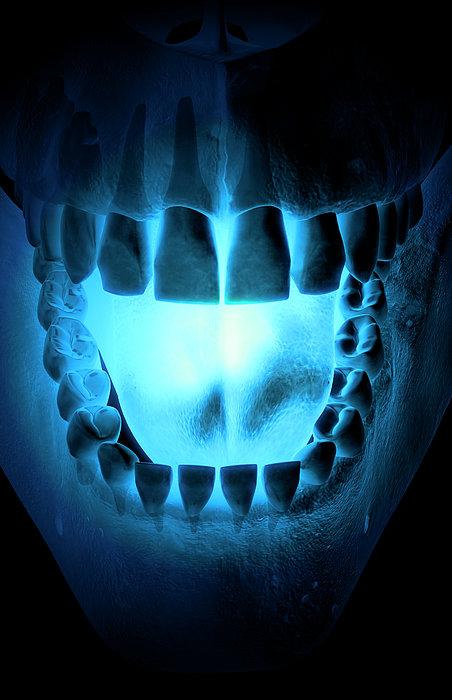 Skull, Teeth And Tongue Print by MedicalRF.com