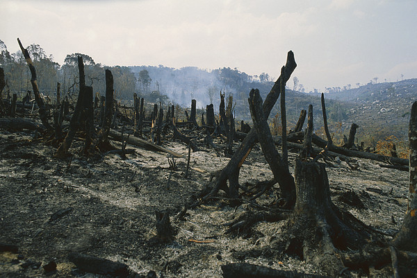 Slash And Burn Agriculture, Where Print by Konrad Wothe
