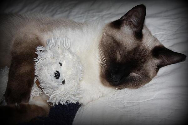 Rosa Shannon - Sleeping cat
