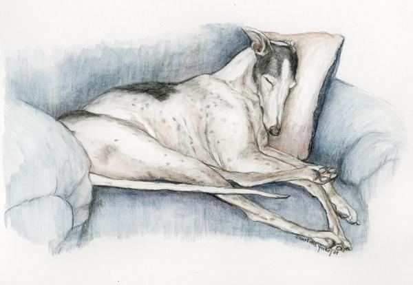 Sleeping Greyhound Print by Charlotte Yealey