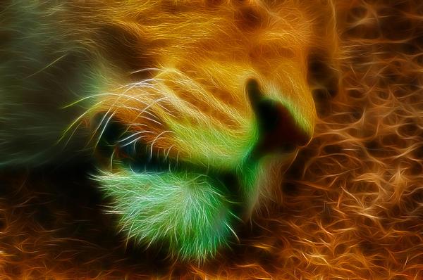 Sleeping Lion 2 Print by Chris Thaxter