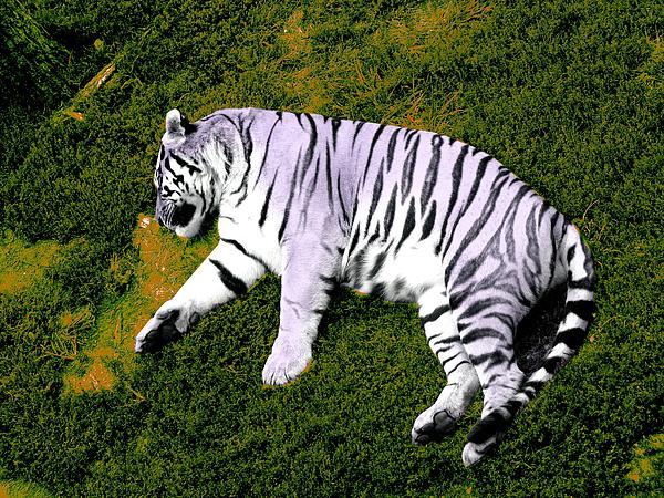 Sleepy Tiger 2 Print by Brandy Lacey