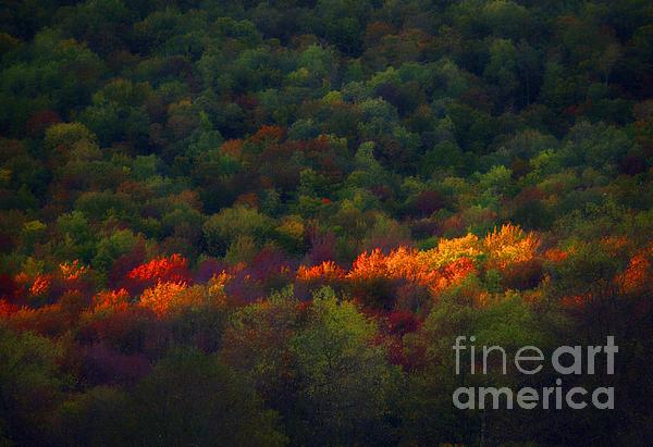 Slice Of Light Evening In Fall Print by Dan Friend