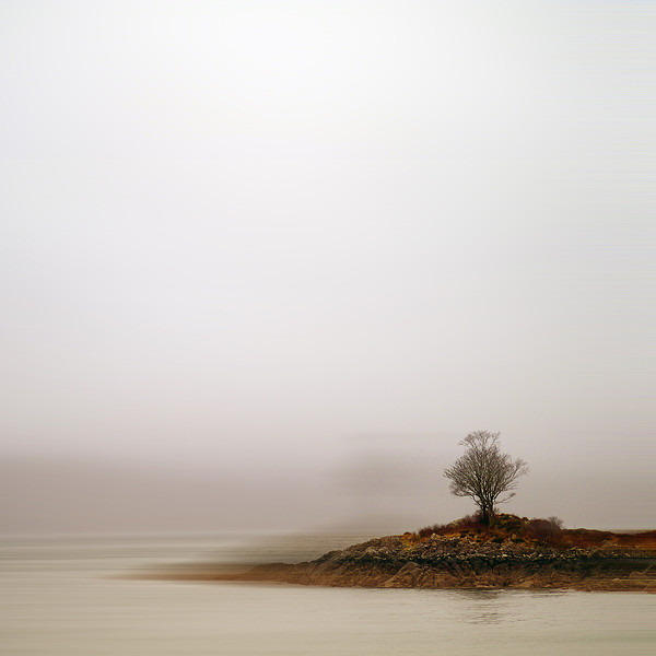 Small Island With Lone Tree Print by Andrew Lockie
