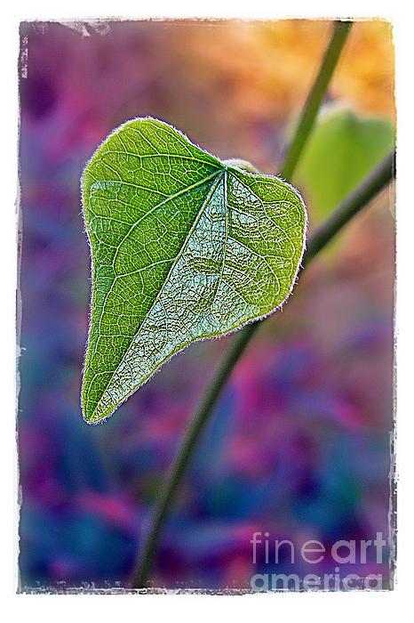 Smilax Print by Judi Bagwell