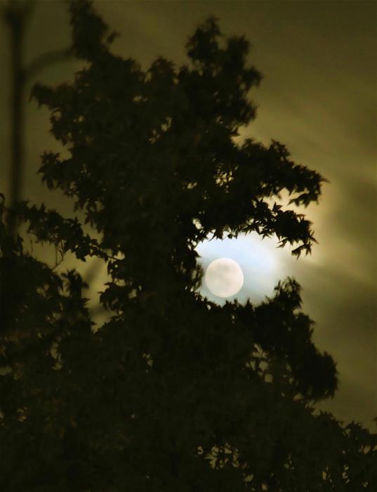 Smoke Dragon Tree Swallows Moon Print by CML Brown