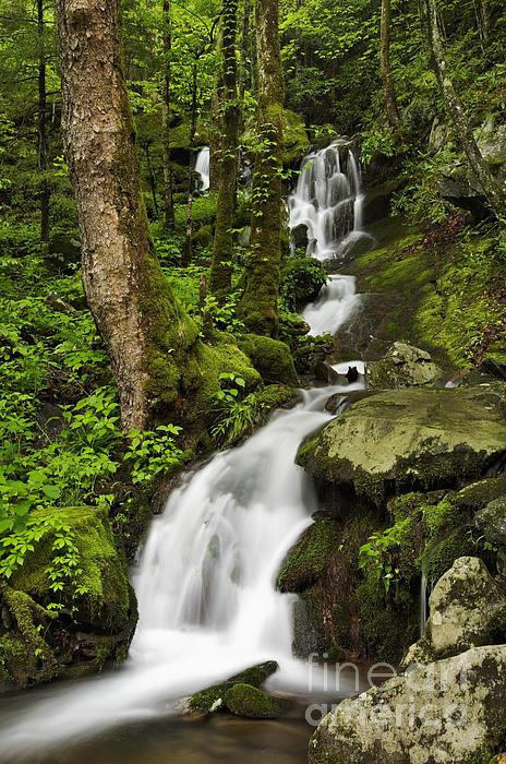 Daniel Dempster - Smoky Mountain Cascade - D002388