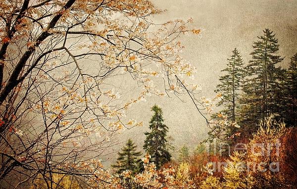 Cheryl Davis - Smoky Mountain Springtime Rain