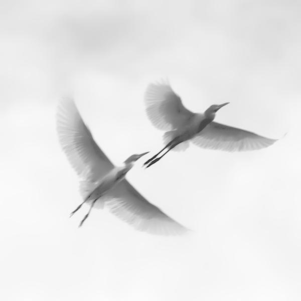 Ag Adibudojo - Smooth Flying