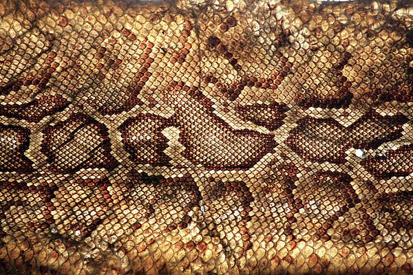 Snake Skin Print by Abner Merchan