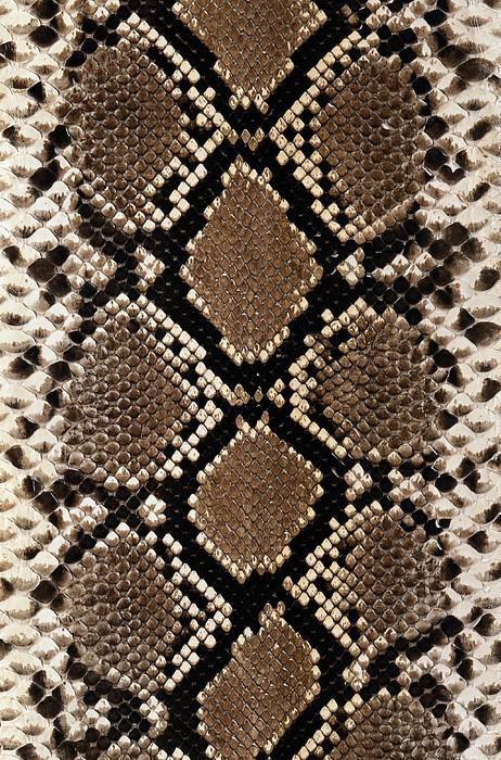 Snake Skin Print by Siede Preis