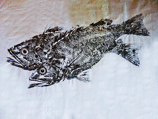 Snapper Print by William Fields