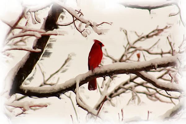 Snow Cardinal Print by Janet Pugh