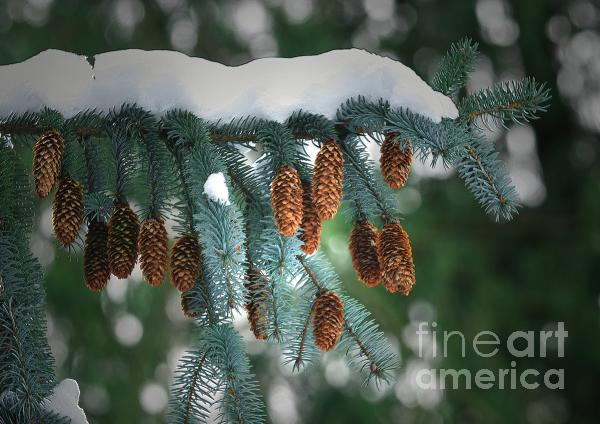 Snow Cones Print by Sharon  Talson