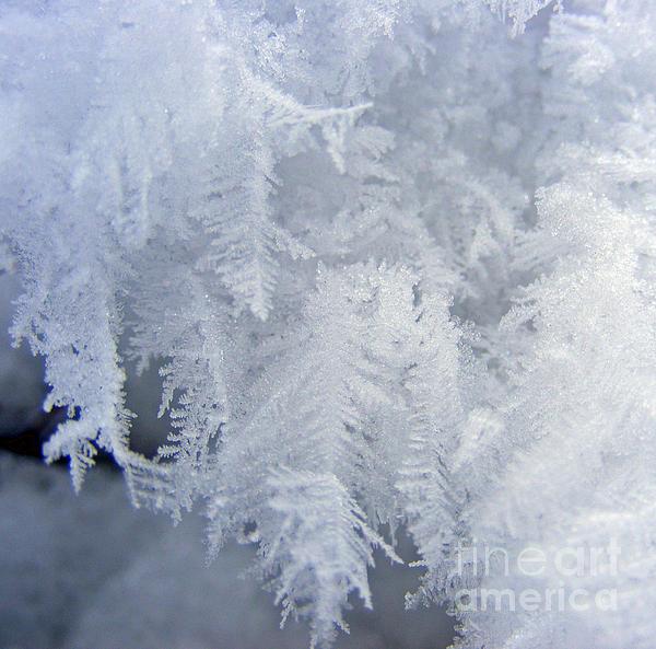 Kara Kincade - Snow Ferns