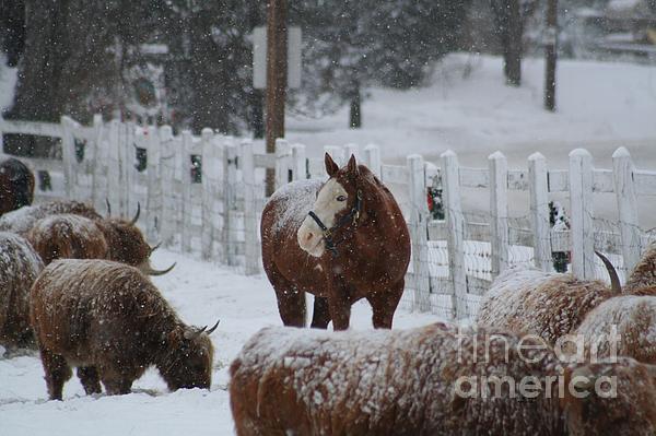 Snow Horse Print by Linda  Jackson