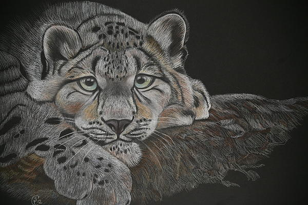 Snow Leopard Print by Stephanie L Carr