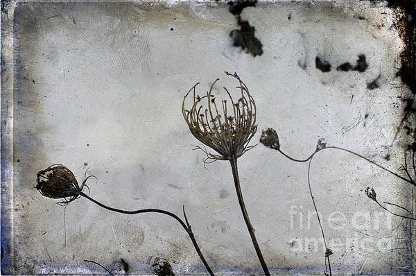 Snow Seeds Print by Paul Grand