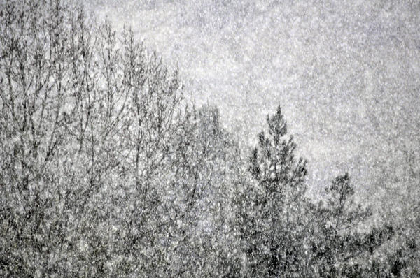 Snow Squawl Print by Laura Mountainspring